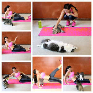 cat workout benderfitness.com